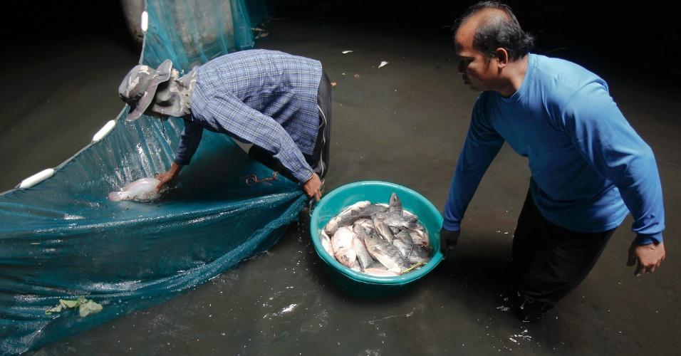 13.jan.2015 - Entre as espécies de peixes que vivem no piso do shopping center abandonado estão carpas e tilápias