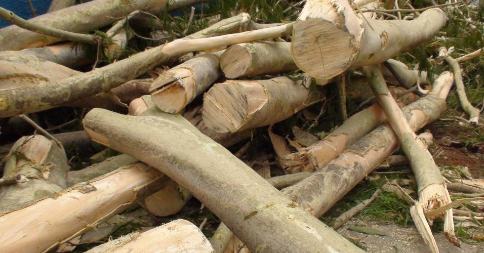 Pedaços de troncos e galhos de angico ocupam calçada em rua do bairro paulistano do Paraíso após queda de árvore. Apesar de ser de madeira nobre, o angico foi levado para aterro sanitário como