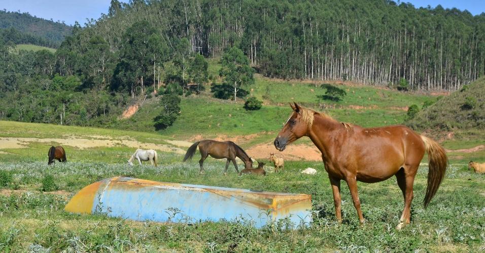 19.jan.2015 - Cavalos pastam onde antes havia água da represa de Paraibuna, que integra a bacia do rio Paraíba, em São Paulo, nesta segunda-feira (19)