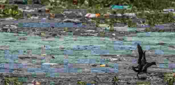 Ave procura comida em meio ao lixo que boia na represa Billings, na zona sul de SP - Danilo Verpa/Folhapress