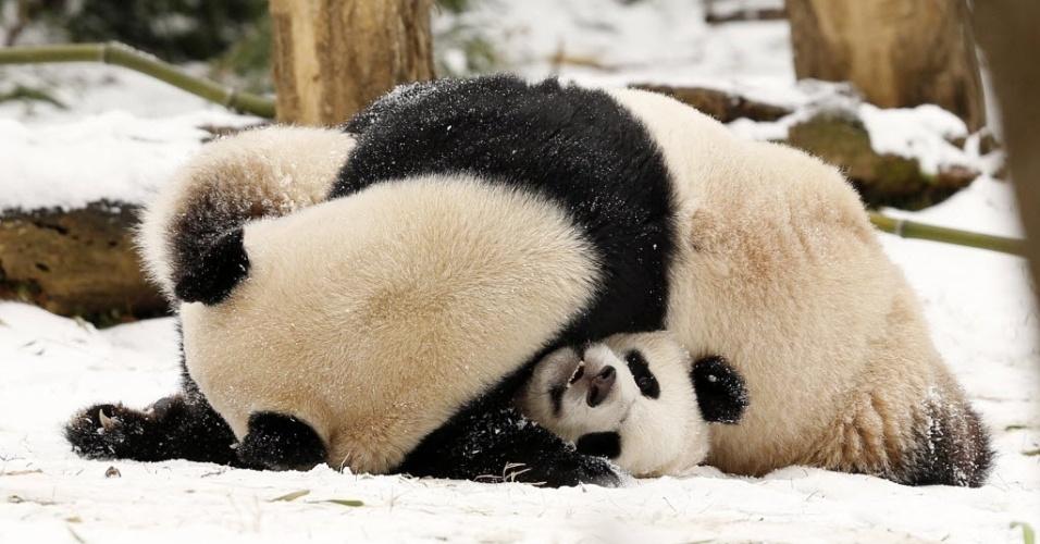 27.jan.2015 - Fêmea de panda gigante Mei Xiang brinca com seu filhote Bao Bao no zoológico nacional Smithsonian, em Washington, nesta terça-feira. Milhões de americanos foram afetados ao longo da costa nordeste dos Estados Unidos após uma tempestade de neve paralisar Nova York e outras grandes cidades