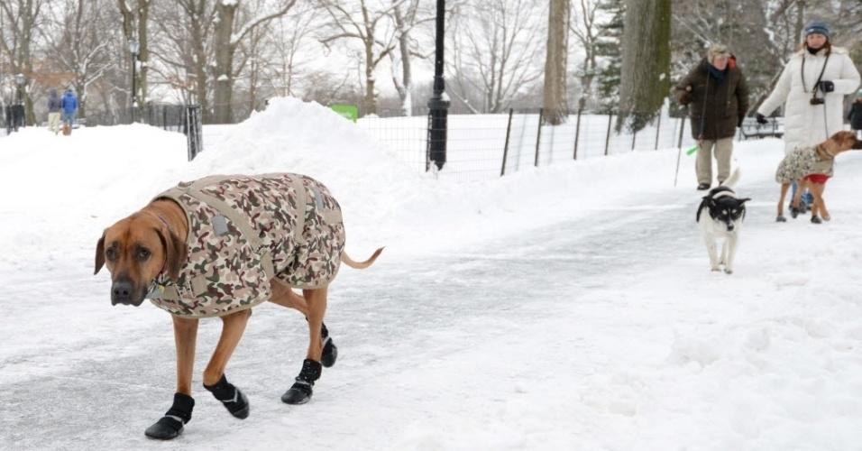 27.jan.2015 - O cão Orion (à esquerda) usa roupa e sapatos para caminhar pelo Central Park depois de uma tempestade de neve atingir Nova York, nos Estados Unidos. As interdições de estradas e paralisações do transporte público foram suspensas na cidade, onde caiu menos neve do que previsto. A população criticou as autoridades pela paralisação dos serviços sem necessidade.