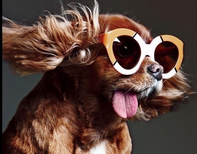 """28.jan.2015 - A cadela Toast é famosa por sua conta do Instagram """"toastmeetsworld"""" (com 158 mil seguidores), mas já foi vítima de maus-tratos em um canil"""
