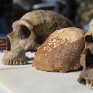 Parte do crânio de um Homo sapiens (centro), encontrado na caverna de Manot, na Galileia (noroeste de Israel) - Jim Hollander/EFE