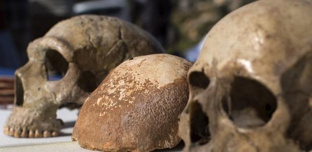 Crânio de um Homo Sapiens (centro e direita) ao lado de crânio de Neanderthal (esquerda)