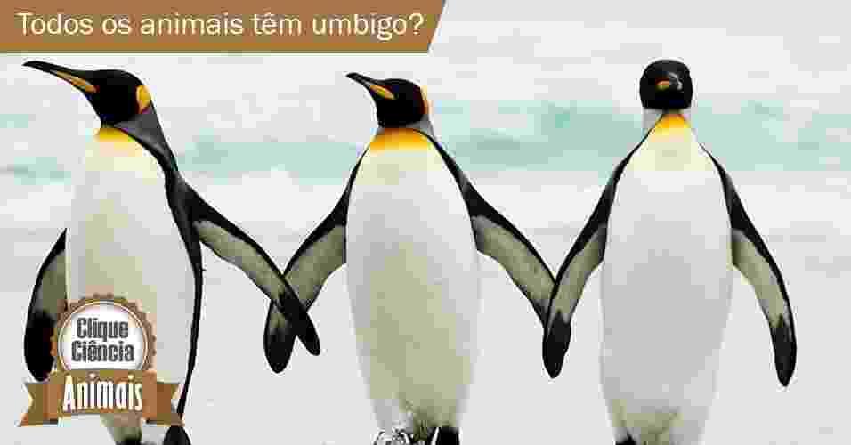 Clique Ciência: todos os animais têm umbigo? - National Geographic/Arte UOL