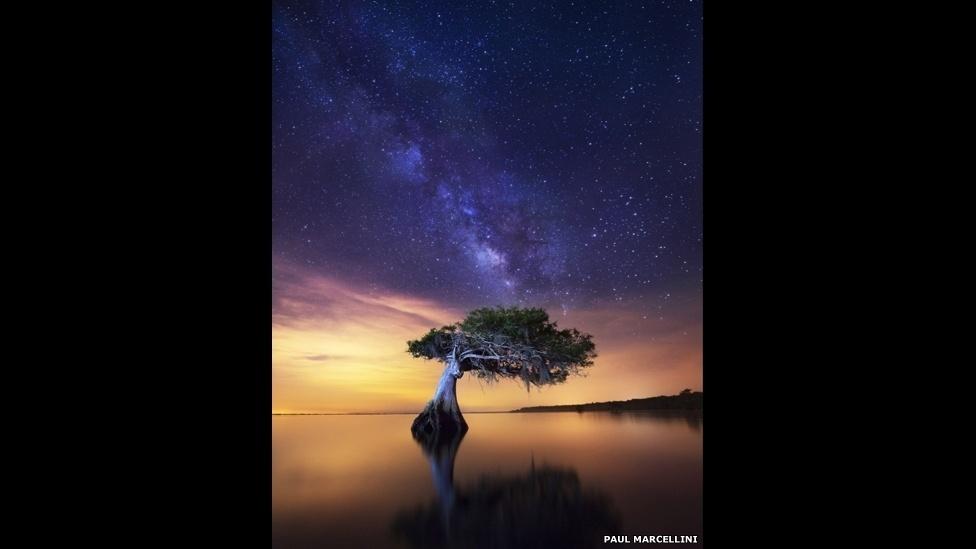 Nos pântanos da Flórida (EUA), Paul Marcellini encontrou este