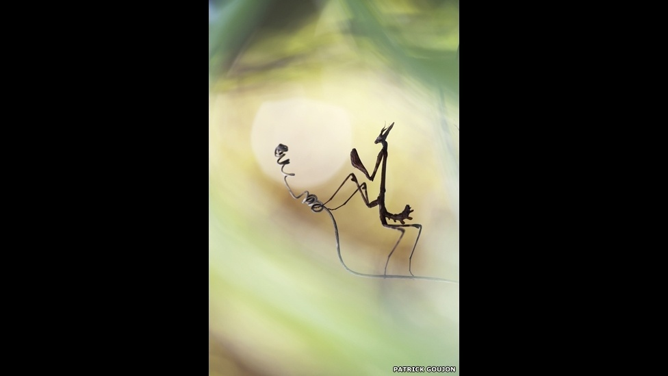 Patrick Goujon conseguiu fotografar esse pequeno louva-a-deus no gramado de sua casa, no Sul da França, e foi o vencedor da categoria