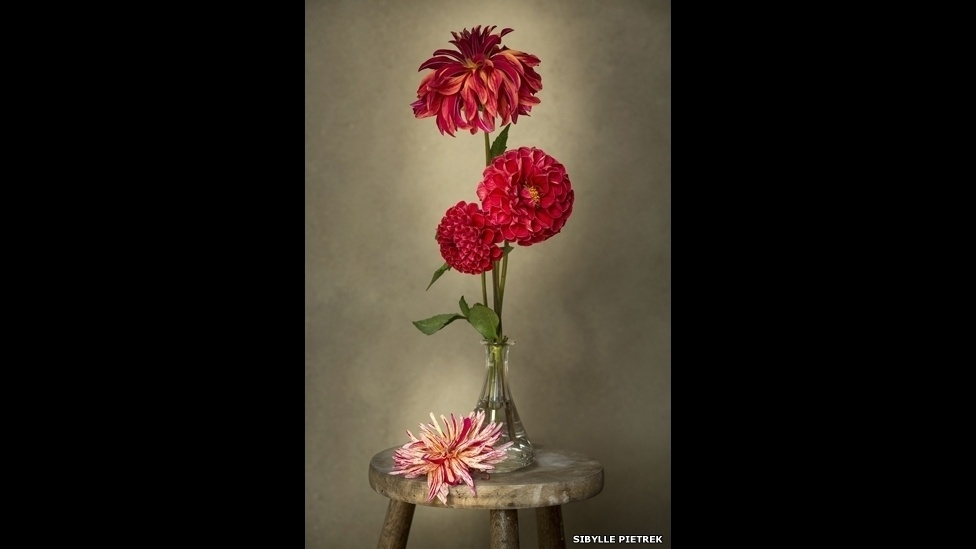 Sybelle Pietrek apostou numa imagem tipo natureza morta dessas dálias. O esforço foi premiado com o prêmio na categoria Beleza das Plantas