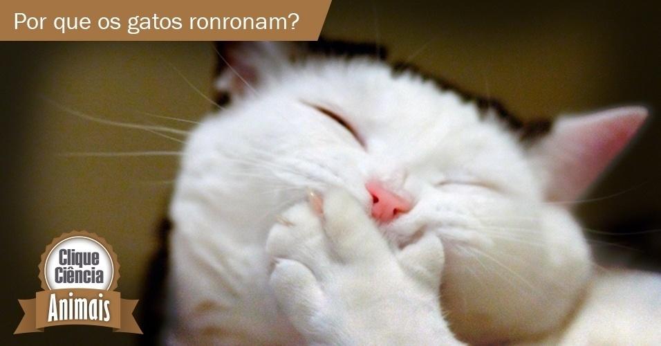 Clique Ciência: por que os gatos ronronam?