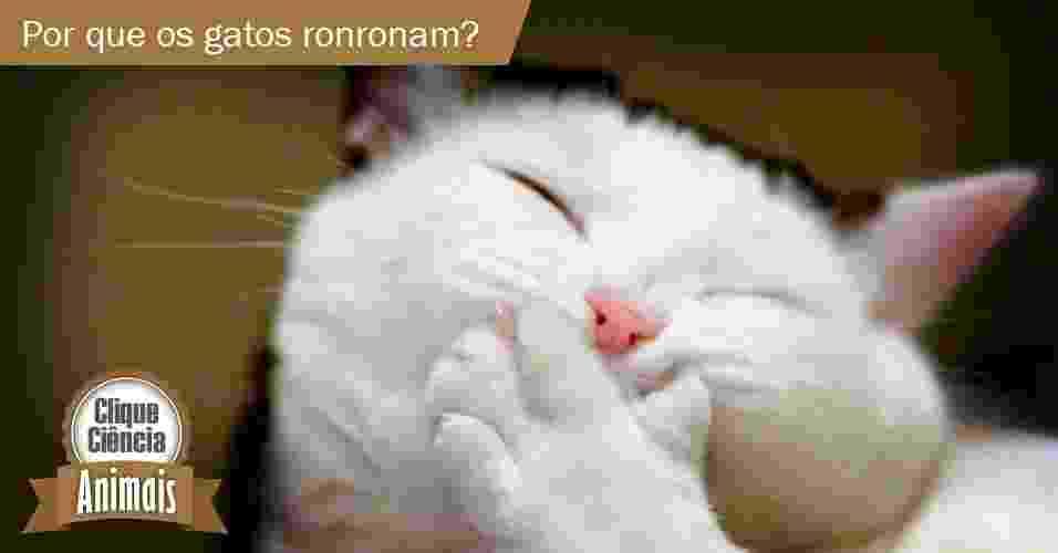 Clique Ciência: por que os gatos ronronam? - New York Times/Arte UOL