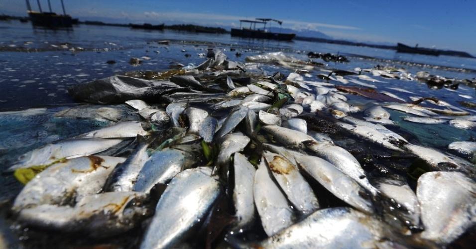 24.fev.2015 - Peixes mortos boiam nas margens da Baía de Guanabara, no Rio de Janeiro, nesta terça-feira (24). Membros do Comitê Olímpico Internacional se reunirão nesta semana para analisar se a água estará completamente limpa para as provas de vela em 2016