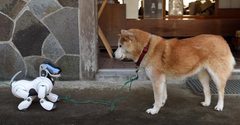 """26.fev.2015 - O cão-robô Aibo virou o melhor amigo do homem no Japão. A Sony lançou o """"bicho"""" em 1999 e, em 20 minutos, cerca de 3.000 foram vendidos, apesar do preço (250 mil ienes, cerca de R$ 6.000). Em sua última versão, os gadgets eram capazes até de desenvolver personalidade e expressar emoções. O pet artificial, porém, deixou de ser fabricado em 2006. Há um ano, a empresa decidiu também fechar o """"serviço veterinário'', conhecido como ?Aibo Clinic''. Com isso, os donos ficaram sem ter o que fazer com os bichos que ficam ?doentes'', precisando de conserto. Aos proprietários, portanto, sobrou o funeral de seus fiéis companheiros"""