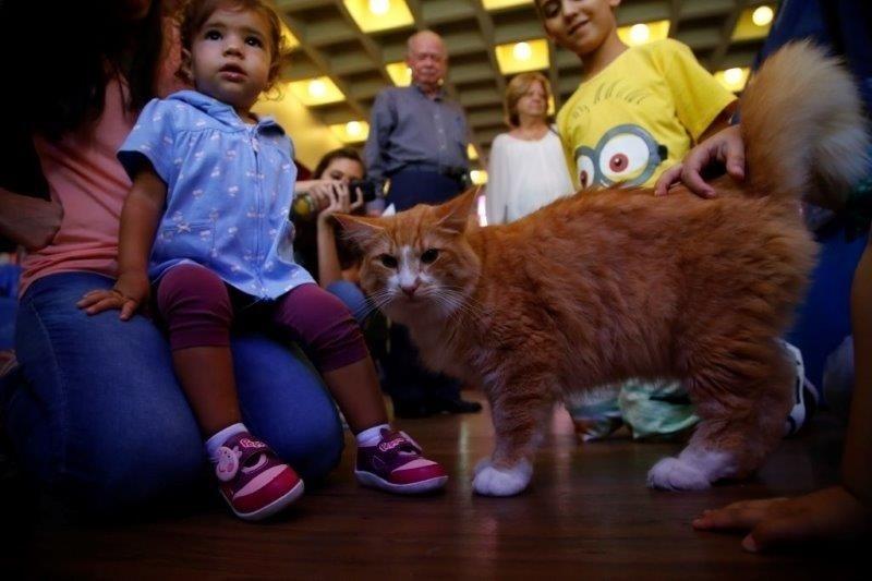 28.fev.2015 - Expectadores observam gato que participa da 156ª Exposição Internacional de Gatos, organizada pelo CBG (Clube Brasileiro do Gato), na tarde deste sábado (28). O evento acontece no Club Homs, na avenida Paulista, e vai até este domingo (1º)
