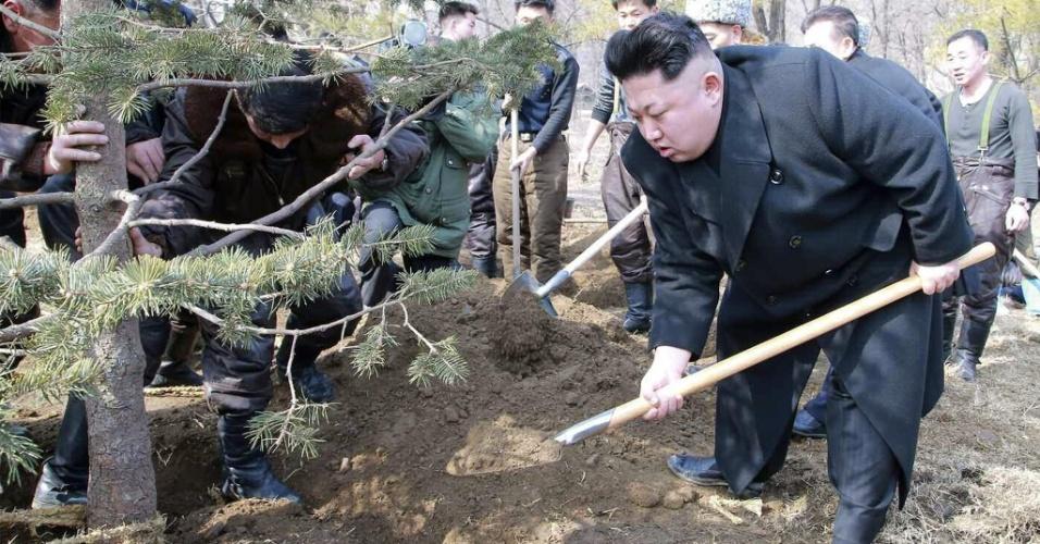 3.mar.2015 - O líder da Coreia do Norte, Kim Jong-un, planta árvores em Pyongyang, seguindo uma tradição iniciada pelo avô e considerado o fundador do país, Kim Il-sung. O plantio de árvores foi realizado em todas as províncias do país, de acordo com a KCNA. A imagem foi divulgada nesta terça-feira (3)