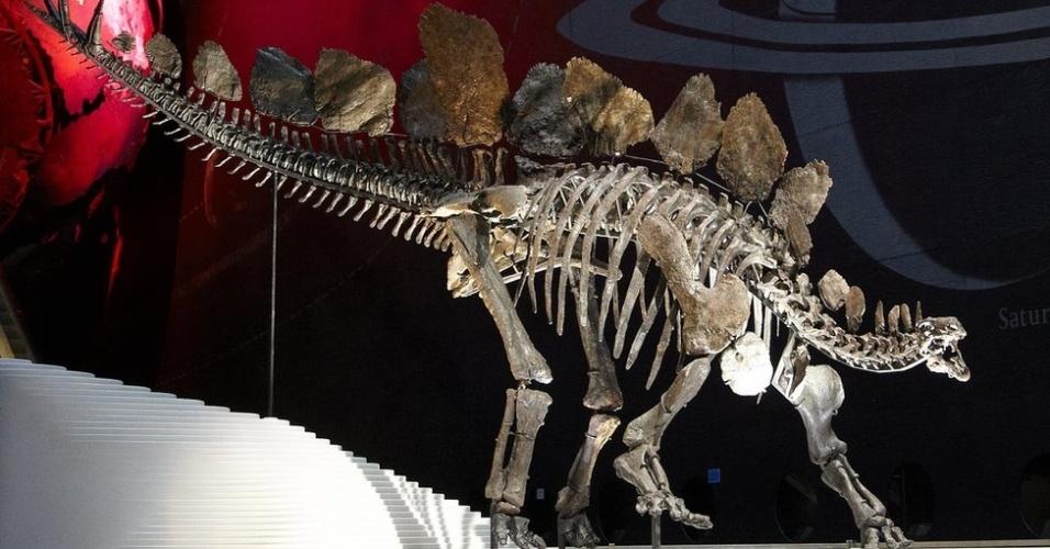 4.mar.2015 - Cientistas britânicos determinaram que a fêmea de estegossauro batizada de