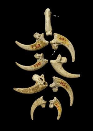 c66d0cd9e1e Neandertais criaram primeiras joias da humanidade há 130 mil anos ...