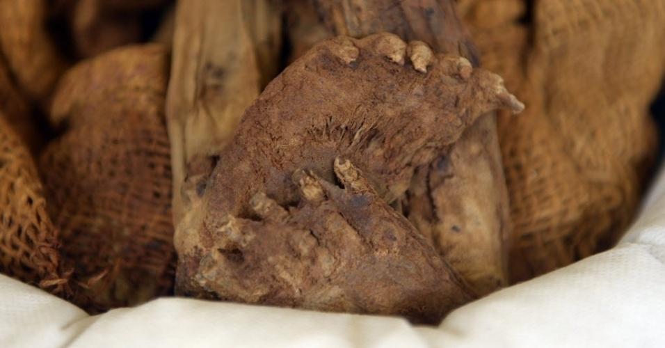 12.mar.2015 - Arqueólogo descreve uma urna funerária pré-incaica em pesquisa no sítio arqueológico de Puruchuco, em Lima, no Peru. No local, já foram descobertas mais de 2.000 múmias, além de cerâmicas e centenas de tecidos e artefatos de ouro, prata e cobre