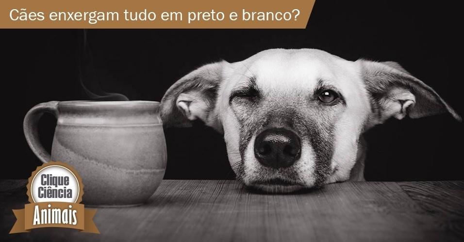 Clique Ciência: cães enxergam tudo em preto e branco?