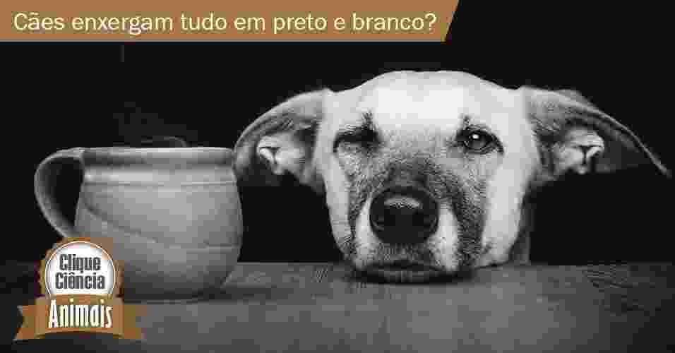 Clique Ciência: cães enxergam tudo em preto e branco? - Arte UOL