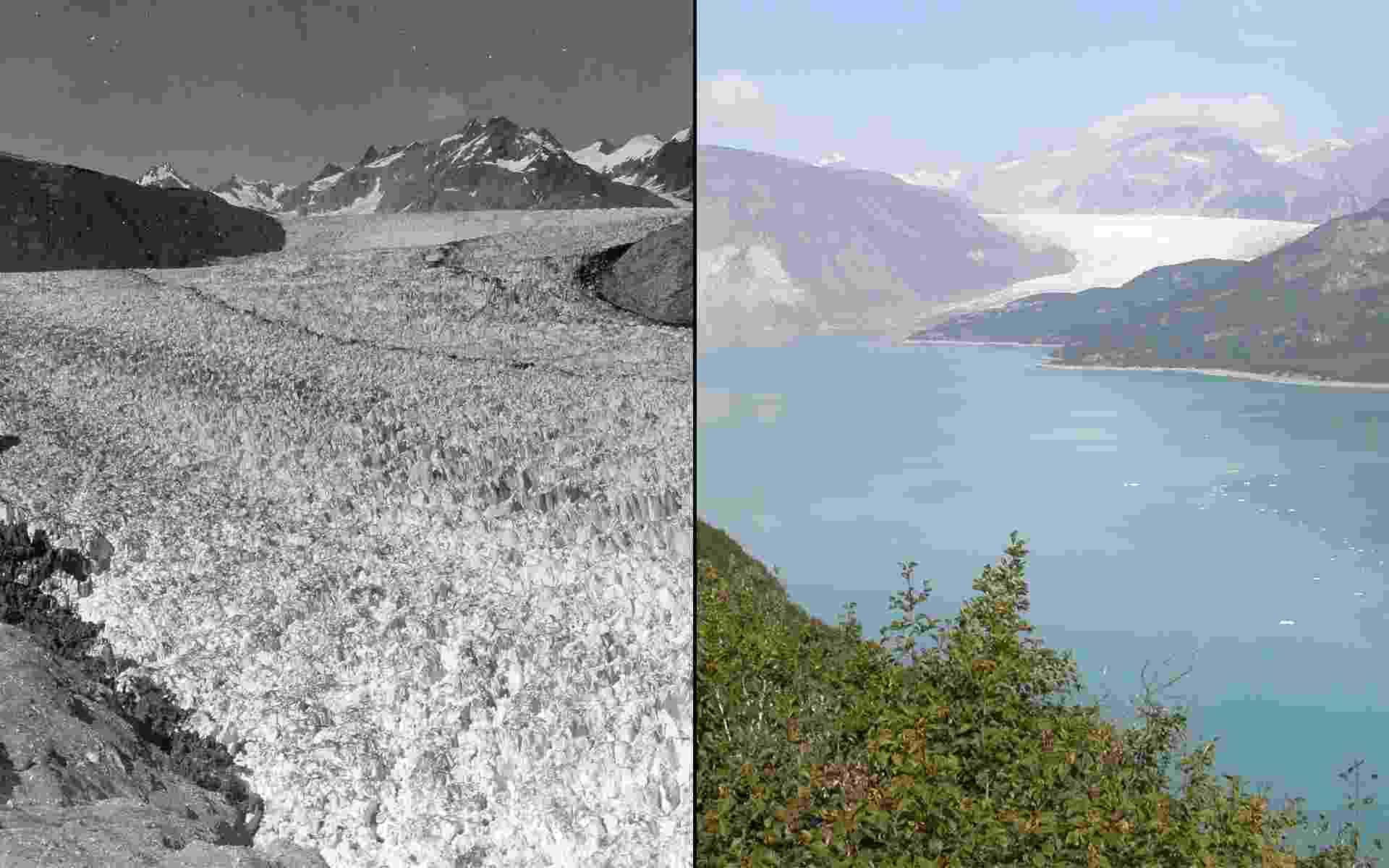 17.mar.2015 - Imagens da geleira de Muir, no Alaska. À esquerda, uma fotografia de 1941 comparada a outra de 2004 - 1941/Ulysses William O. Field; 2004/Bruce F. Molnia