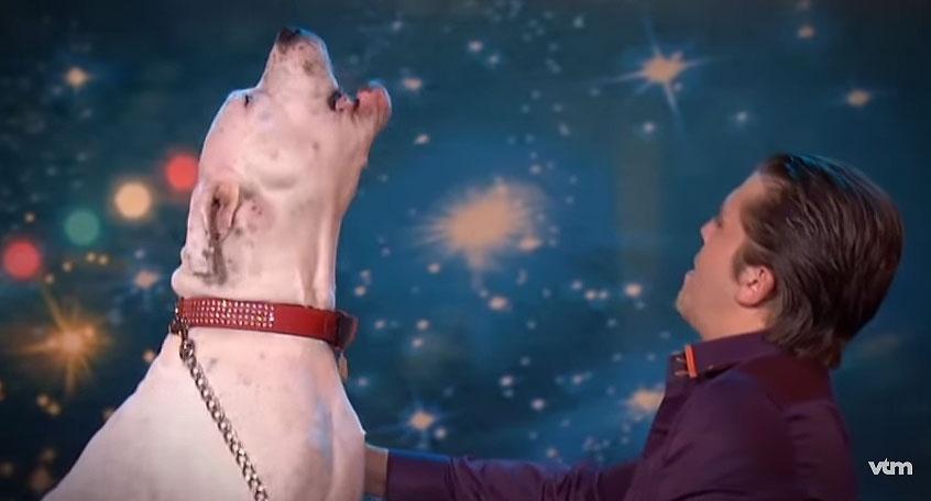 Cachorra se emociona ao ouvir música de Whitney Houston