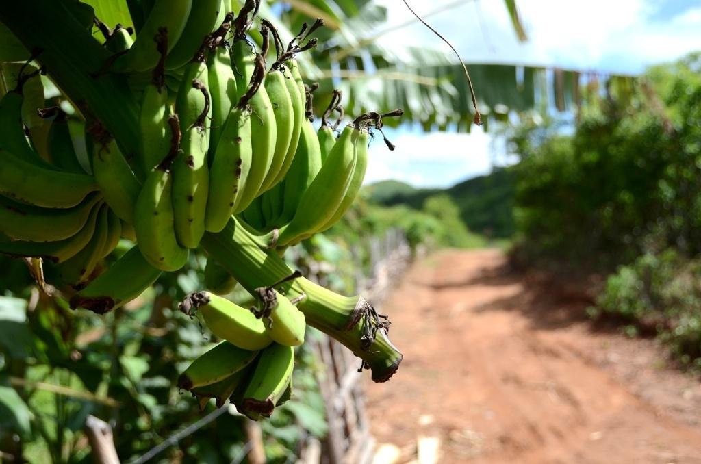 19.mar.2015 - Moradores da comunidade rural de Barra do Bento, em Canindé (CE), cultivam frutas e verduras com a água que vem de 'açude inteligente'
