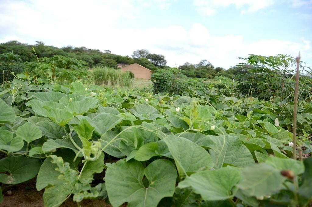 25.mar.2015 - Com o terreno molhado com a ajuda da 'barragem subterrânea, dona Damiana consegue plantar frutas e verduras em sua pequena propriedade