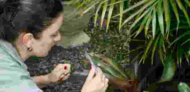 Agente de vigilância analisa água de bromélia - Betina Carcuchinski/PMPA