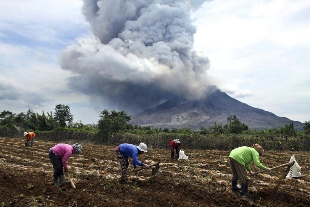 2.abr.2015 - Camponeses trabalham enquanto o monte Sinabung expele uma nuvem de fumaça e cinzas, no oeste da Indonésia. O vulcão despertou pela primeira vez em agosto de 2010 depois de ter ficar adormecido por 400 anos