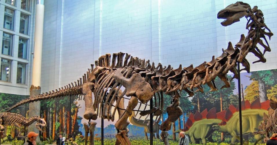 07.abr.2015 - Esqueleto de um Apatossauro é retratado no Carnegie Museum of Natural History, em Pittsburgh, nos Estados Unidos