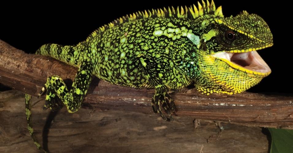 7.abr.2015 - Novas espécies de 'dragões anões' descobertas nos Andes