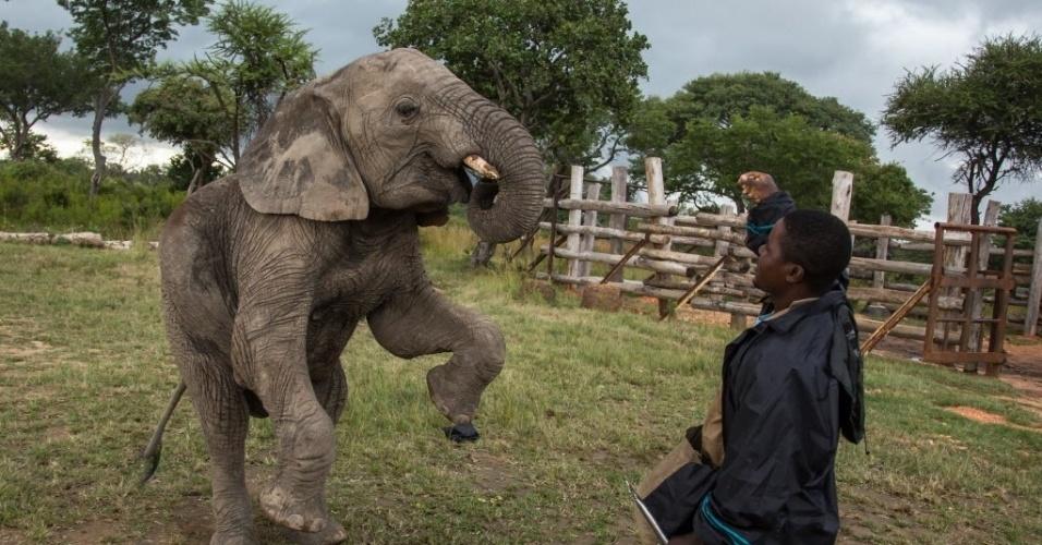 8.abr.2015 - Filhote de elefante elefante