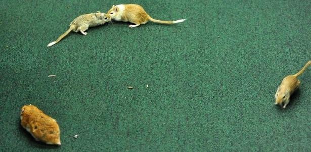 Servidor que soltou ratos é demitido, segundo presidente da CPI - Luis Macedo / Câmara dos Deputados