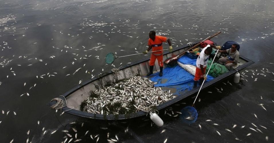 16.abr.2015 - Garis retiram peixes mortos da lagoa Rodrigo de Freitas, no Rio de Janeiro, onde serão realizadas competições de remo e canoagem nos Jogos Olímpicos de 2016. Até está quinta-feira (16) foram retirados 37 toneladas de peixes em uma semana