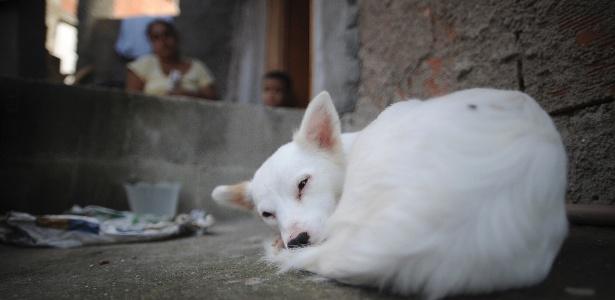 A vizinha Mariléia Santos disse que, se o animal não for levado para o Piauí, ficará na casa dela - Fábio Teixeira/UOL