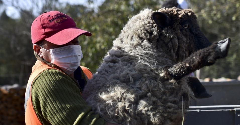 24.abr.2015 - Homem usa uma máscara enquanto carrega uma ovelha nesta sexta-feira (24), em La Ensenada, no sul do Chile, onde o vulcão Cabulco entrou em erupção na ultima quarta-feira (22). Ele continua instável, expulsando fumaças e cinzas, por isso que não se pode descartar que haja uma nova explosão, disseram as autoridades nesta sexta-feira (24)