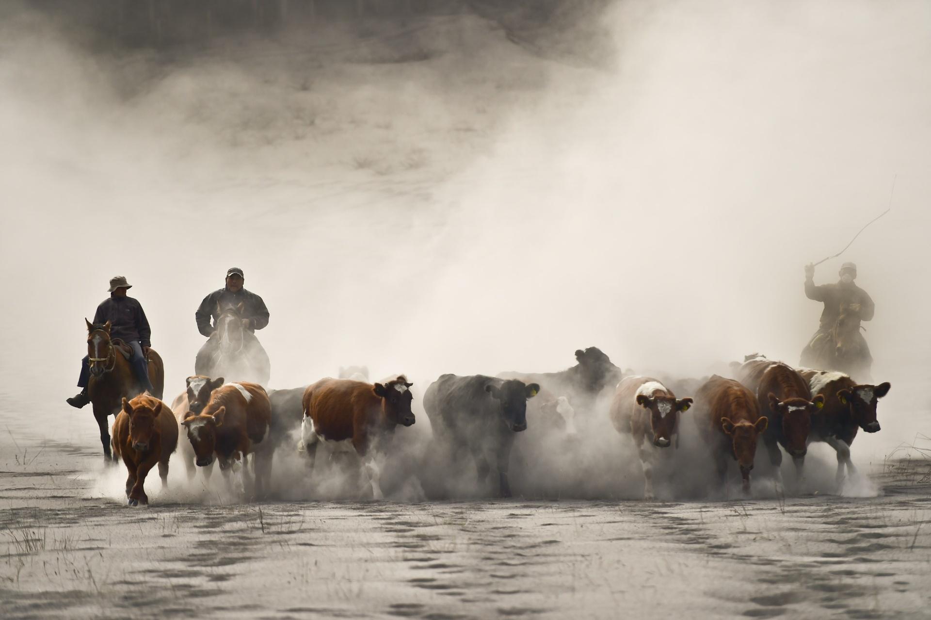 25.abr.2015 - Fazendeiros chilenos conduzem o rebanho em La Ensenada, no sul do país. As autoridades ordenaram a evacuação preventiva de cerca de 2 mil pessoas de áreas de risco