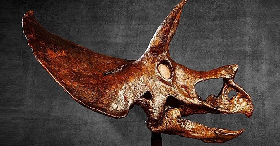 28.abr.2015 - O maior crânio de dinossauro intacto do mundo vai a leilão em Hong Kong, na China. O fóssil de Tricerátopo mede 2,8 metros, tem 66 milhões de anos, e foi encontrado em Montana, nos Estados Unidos, em 1992. Espera-se que a peça seja vendida no valor de US$ 2 milhões, no leilão que já está aberto e é organizado pela Evolved Ltd. A última vez que um material arqueológico desse tamanho e importância foi apresentado ao mercado foi em 1997, quando um fóssil de Tiranossauro rex chamado