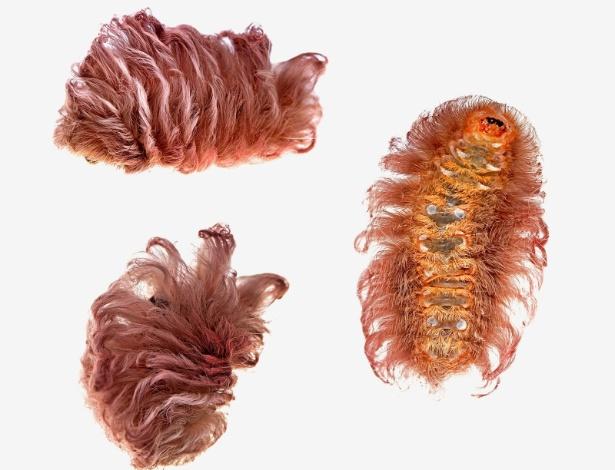 29.abr.2015 - Em sua fase taturana, esta mariposa da família Megalopygidae exibe uma espécie de topete peludo e foi encontrada próximo ao Centro de Pesquisa Tambopata, no Peru, que serve como base para pesquisadores que exploram a fauna na Amazônia peruana. A imagem foi feita em dezembro de 2014