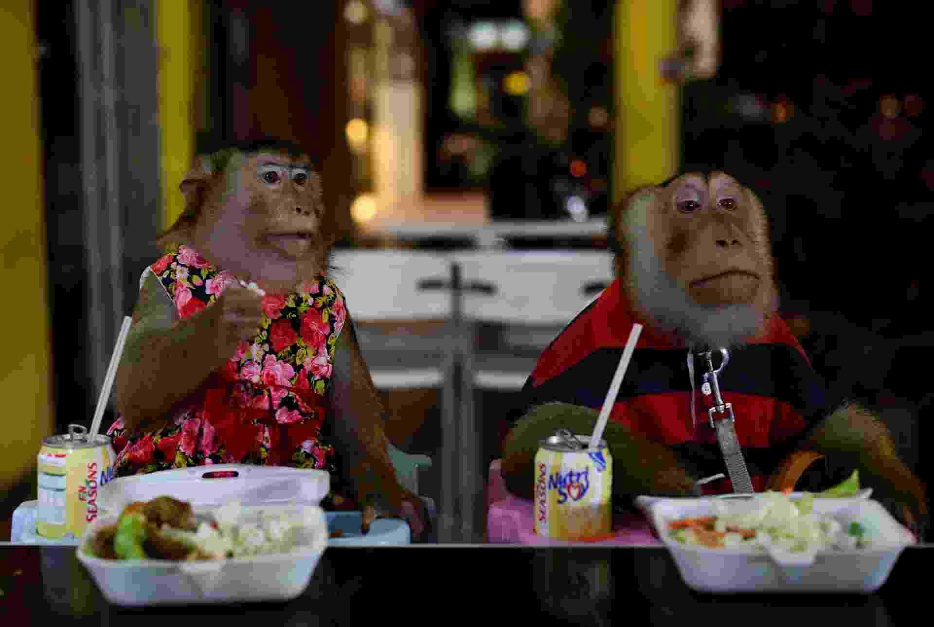 29.abr.2015 - Os macacos JK e Shaki (macho e fêmea, respectivamente), ambos com 9 anos de idade, jantam em um restaurante em Kuala Lumpur, na Malásia. Eles pertencem a Jamil Ismail, 45, e costumam andar de motocicleta com o dono e sair para jantar em restaurantes, o que sempre chama a atenção das pessoas. Às vezes, Jamil usa os dois animais para atuar em propagandas e realizar acrobacias em locais públicos. Os macacos fazem exames médicos regularmente e são considerados como sua família, portanto podem circular livremente dentro de sua casa - Mohd Rasfan/AFP