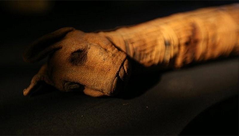 11.mai.2015 - Um projeto do Museu e da Universidade de Manchester revelou que cerca de um terço das centenas de múmias de animais que seriam expostas em uma mostra na cidade britânica estão vazias. Mais de 800 múmias - de gatos e pássaros a crocodilos - já foram analisadas