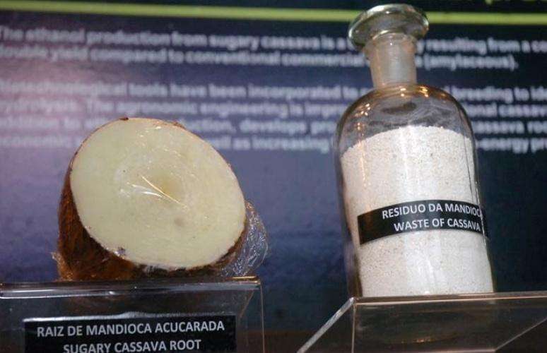 mandioca com biocombustíveis