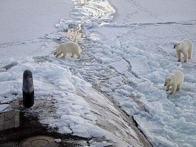 três ursos polares se aproximam com cautela do casco do USS Honolulu, submarino militar norte-americano que se encontrava em missão no Pólo Norte