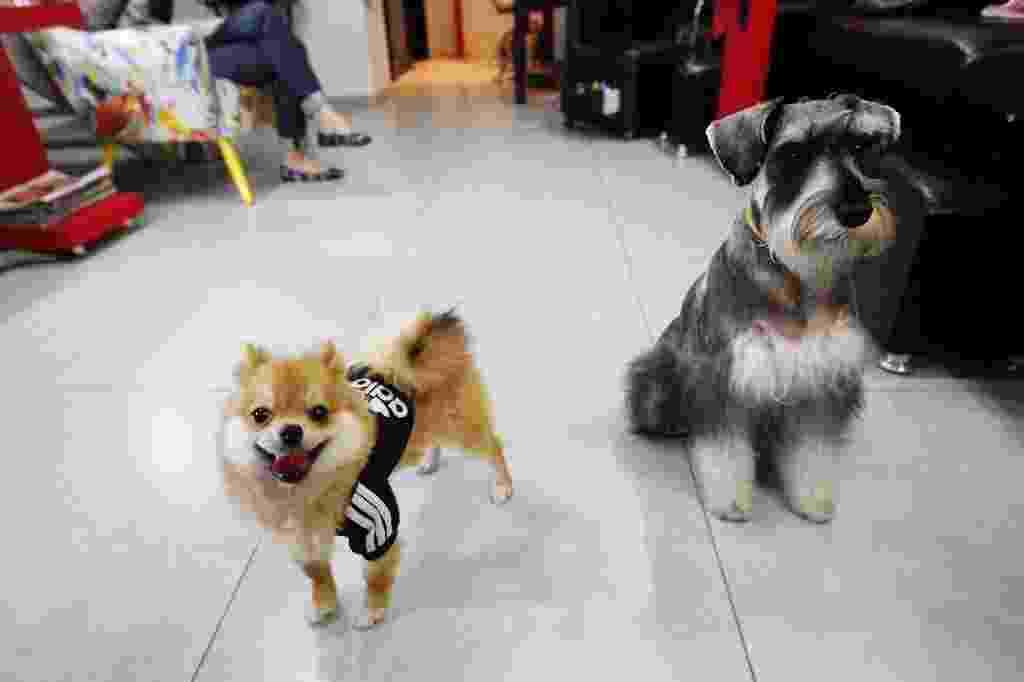 Salão de beleza Maria Joaquina Beauty Club, em Pinheiros (zona oeste de São Paulo), permite que clientes levem seus cães como acompanhantes - Reinaldo Canato/UOL