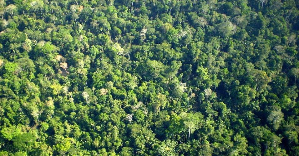 Floresta Amazônica; Amazônia