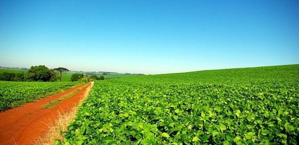 Área de cultivos transgênicos cai no mundo pela 1ª vez, mas cresce no Brasil