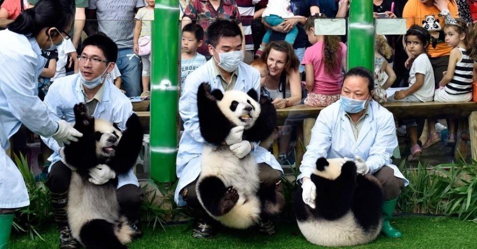 1º.jun.2015 - Crianças observam os pandas trigêmeos gigantes Mengmeng, Shuaishuai e Kuku no zoológico de Changlong, capital da província de Guangdong, no sul da China, nesta segunda-feira (1º). O país celebra o Dia Internacional da Criança