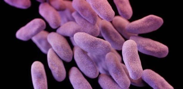 Para pesquisadores, órgãos reguladores deveriam reavaliar uso de antibióticos