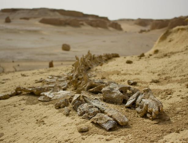 """Fóssil de baleia que pode ser visto em Wadi al Hitan (""""Vale das Baleias"""") no deserto no Egito. Segundo o Ministério do Meio Ambiente, um novo lote de fósseis foi descoberto na área - Wikimedia Commons/Wikipedia"""